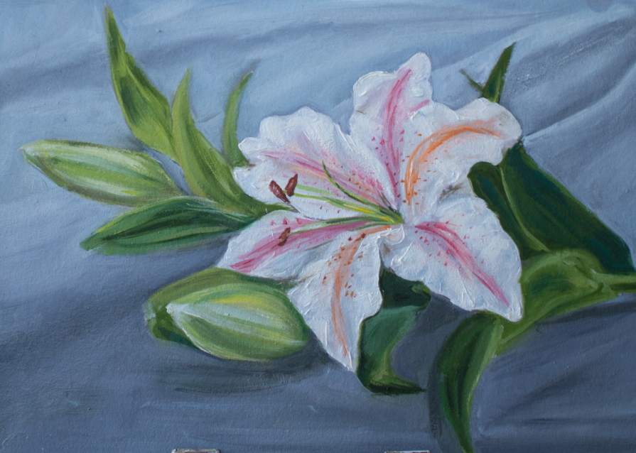 Lily on gray